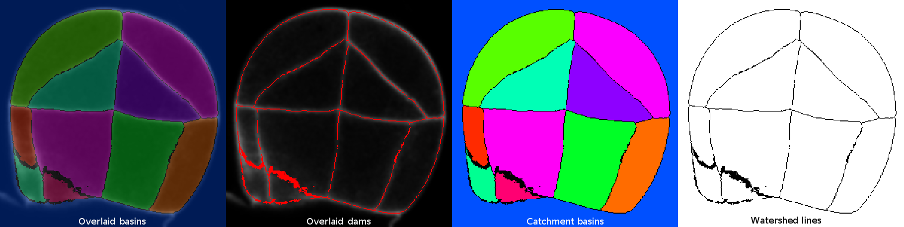 plugin:segmentation:morphological_segmentation:morphological-segmentation-result-examples-latest.png